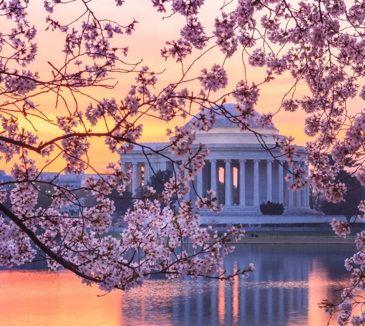 Thomas Jefferson Monument at the Tidal Basin at sunset with cherry blossoms blooming